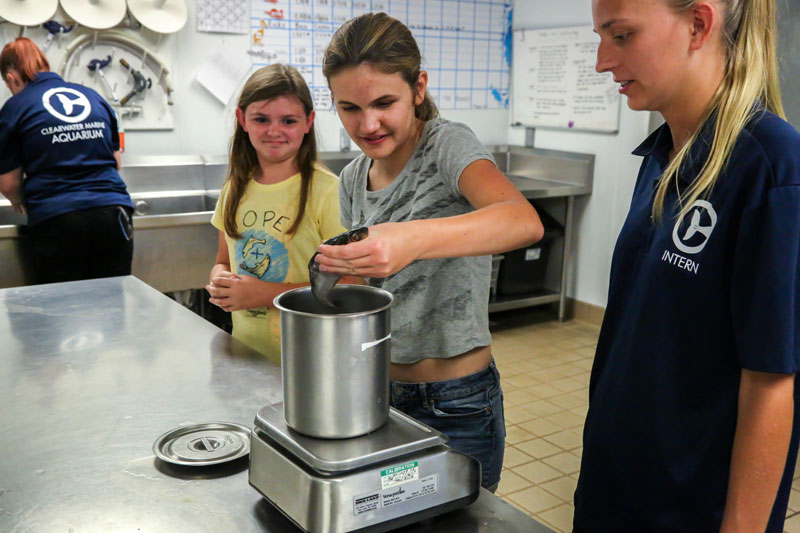 Food preparation at the Clearwater Marine Aquarium