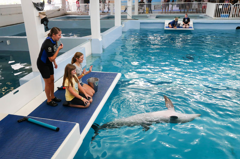 Trainer for a day at the Clearwater Marine Aquarium