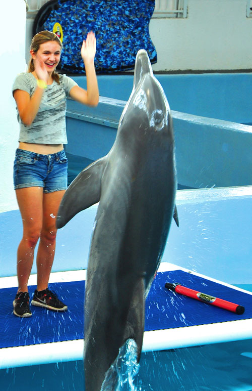 Training with Hope the Dolphin at the Clearwater Marine Aquarium